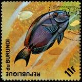 LA REPUBBLICA DEL BURUNDI - CIRCA 1974: il francobollo, stampato nel Burundi, mostra ad un Surgeonfish dell'oceano del pesce l'ac Immagini Stock Libere da Diritti