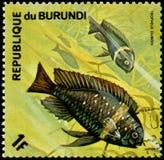 LA REPUBBLICA DEL BURUNDI - CIRCA 1974: il francobollo, stampato nel Burundi, mostra un duboisi di Tropheus delle cichlidae macch Fotografia Stock