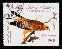 La Repubblica di francobollo delle Comore mostra il lineatus Rosso-messo di Hawk Buteo, serie di bicententenario di Audubon, circ Fotografia Stock
