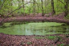 La reserva de naturaleza del meteorito de Morasko Fotografía de archivo