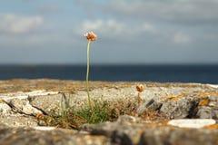 La resistenza di un fiore Fotografia Stock