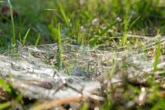 La rete del ragno fotografia stock