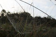 La rete del ragno Immagine Stock