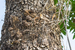 la rete metallica per l'orchidea si sviluppa Fotografia Stock Libera da Diritti