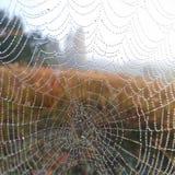 La rete naturale della rete della natura del gocciolamento della goccia di rugiada della rugiada del dettaglio di progettazione d fotografia stock libera da diritti