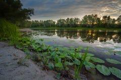 La riflessione degli alberi sulla riva all'alba rays immagini stock