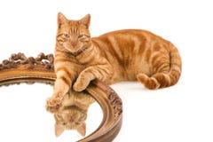 La riflessione del gatto dello zenzero in vecchio specchio fotografia stock