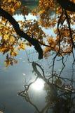 La riflessione del sole di sera nello stagno di autunno Fotografie Stock