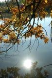 La riflessione del sole di sera nello stagno di autunno Immagine Stock