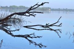 La riflessione dell'albero in lago Fotografie Stock