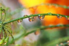 La riflessione della goccia di acqua fiorisce la natura Fotografia Stock Libera da Diritti