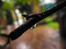 La riflessione di una goccia di pioggia Fotografie Stock