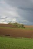 La riga degli alberi baren i campi Fotografia Stock