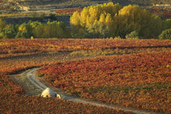 La rioja in autumn Royalty Free Stock Photography