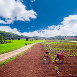 La Rioja vineyard fields in The Way of Saint James. La Rioja vineyard fields biking in The Way of Saint James with bike royalty free stock images