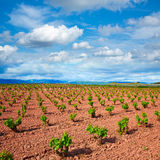 La Rioja vineyard fields in The Way of Saint James. La Rioja vineyard fields by The Way of Saint James in Logrono stock photos