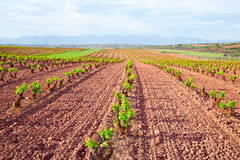La Rioja vineyard fields in The Way of Saint James stock photo