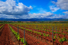La Rioja vineyard fields in The Way of Saint James. La Rioja vineyard fields by The Way of Saint James in Logrono stock photo