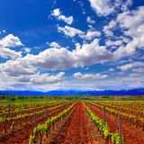 La Rioja vineyard fields in The Way of Saint James stock photo
