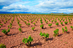 La Rioja vineyard fields in The Way of Saint James royalty free stock images