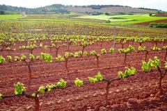 La Rioja vingårdfält i vägen av St James royaltyfri fotografi