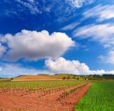 La Rioja vingårdfält i vägen av St James royaltyfria foton