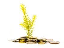 La riqueza crece Imágenes de archivo libres de regalías