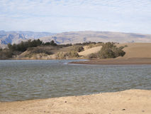 La riserva naturale Charca de Maspalomas Fotografie Stock Libere da Diritti