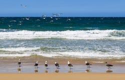 La Riunione dei gabbiani nella spiaggia che guarda al mare Fotografia Stock