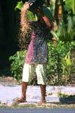la riunione dell'agricoltore ha raccolto la risaia Fotografia Stock Libera da Diritti