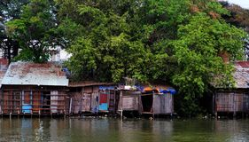 La riva del fiume vecchia retrocede la casa dalla lamina di metallo ondulata sotto il grande albero fotografia stock