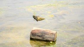 La riva del lago video d archivio