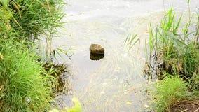 La riva del lago archivi video