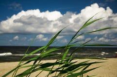 La riva del mare o dell'oceano Fotografia Stock Libera da Diritti