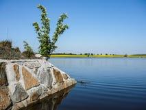 La riva dello stagno Fotografie Stock