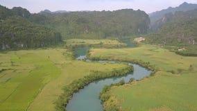 La rivière bleue reflète les arbres verts entre les gisements d'arachide banque de vidéos