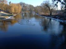 La rivière d'insecte de Yuzhny Le Polesye Région de Vinnitsa Images stock