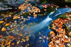 La rivière et les feuilles tombées image libre de droits