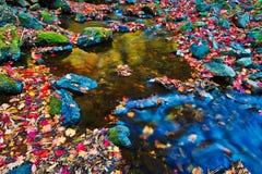 La rivière et les feuilles tombées rouges image stock