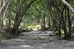 La rivière fonctionne dans l'inconnu Image libre de droits