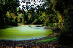 La rivière Green dans Angkor, Cambodge Photos stock