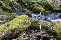 La rivière passe rapidement par une forêt moussue images libres de droits