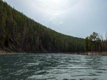 La rivière se tourne vers le contexte des forêts de pin photo stock