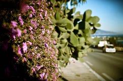 La Riviera Photographie stock libre de droits