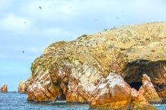 La roca archivó con los pájaros peruanos del bobo en Islas Ballestas Imágenes de archivo libres de regalías