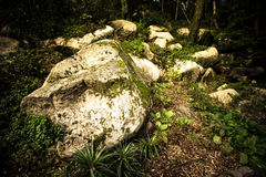 La roca vieja en la madera musgo-crecida Foto de archivo