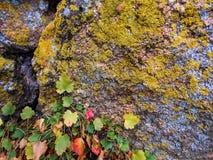 La roccia, lichene, va immagine stock