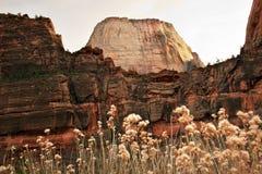 La roccia rossa del trono bianco mura il canyon Utah di Zion Immagine Stock
