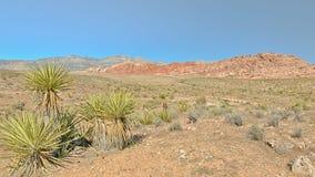 La roccia rossa trascura, area rossa di conservazione del canyon della roccia, NV Immagine Stock