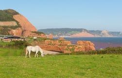 La roche blanche de poney et de grès empile la plage Devon England R-U de baie de Ladram situé entre Budleigh Salterton et Sidmou images libres de droits